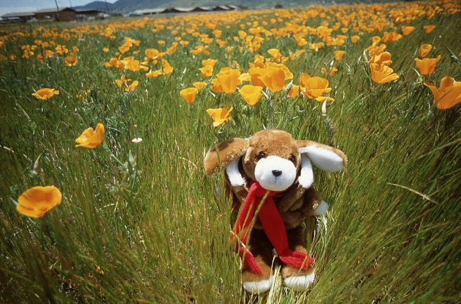 Clyde on assignment photographing wild flowers.